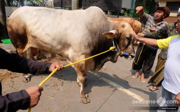 https: img.okezone.com content 2021 07 21 330 2443612 adab-penyembelihan-hewan-kurban-jangan-menajamkan-pisau-di-depannya-TJHfpHdKJu.jpg