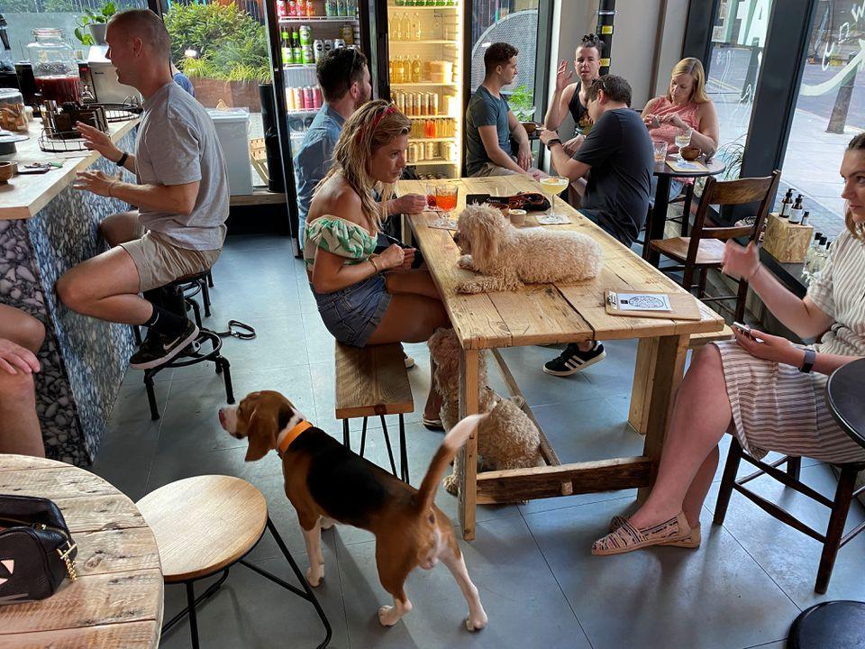 https: img.okezone.com content 2021 07 27 301 2446895 datang-ke-bar-ini-anjing-bisa-minum-minum-dan-menggonggong-sepuasnya-8czCJ8VujU.jpg
