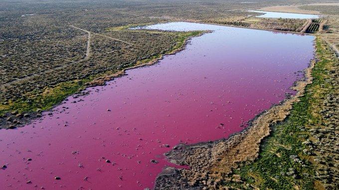 https: img.okezone.com content 2021 07 28 18 2447343 efek-polusi-danau-di-argentina-berubah-warna-jadi-pink-pekat-t3WDPZXah0.jpg