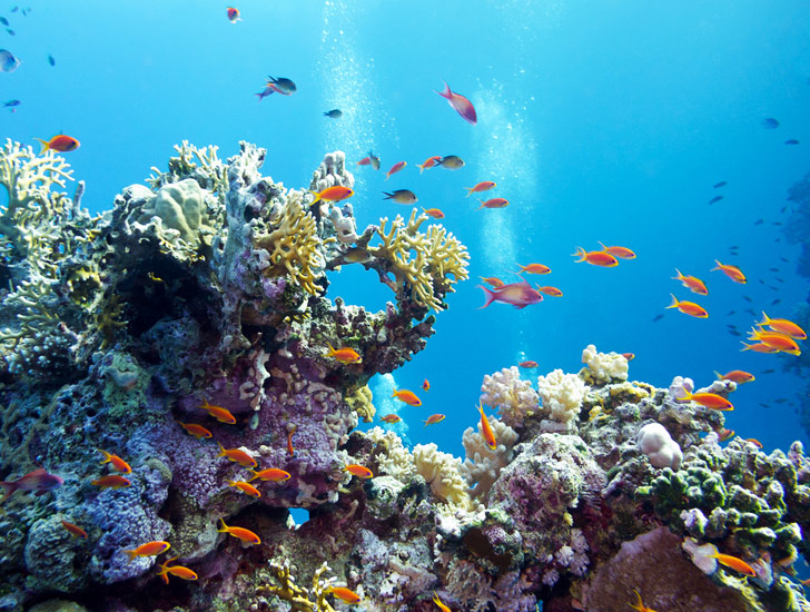 https: img.okezone.com content 2021 07 28 406 2447474 marak-pencurian-terumbu-karang-di-taman-nasional-komodo-modusnya-pura-pura-jadi-nelayan-MS32eY7lSY.jpg