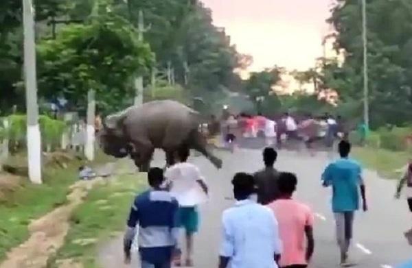 https: img.okezone.com content 2021 07 29 18 2447797 mengamuk-diganggu-pekerja-kebun-teh-gajah-injak-injak-seorang-pria-hingga-tewas-5ZPGT5fM3z.jpg