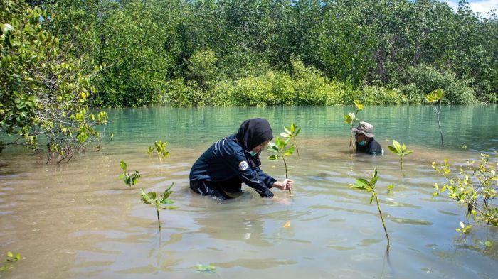 https: img.okezone.com content 2021 07 30 65 2448411 lindungi-pulau-bawean-mahasiswa-unair-tanam-mangrove-di-kawasan-potensial-wYBnFwLbJ8.jpg