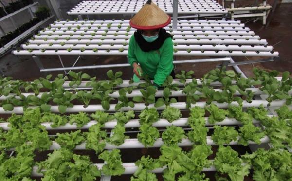 https: img.okezone.com content 2021 07 30 65 2448587 mahasiswa-uns-kembangkan-pertanian-urban-untuk-angkat-perekonomian-masyarakat-15wHUtqk1t.jpg