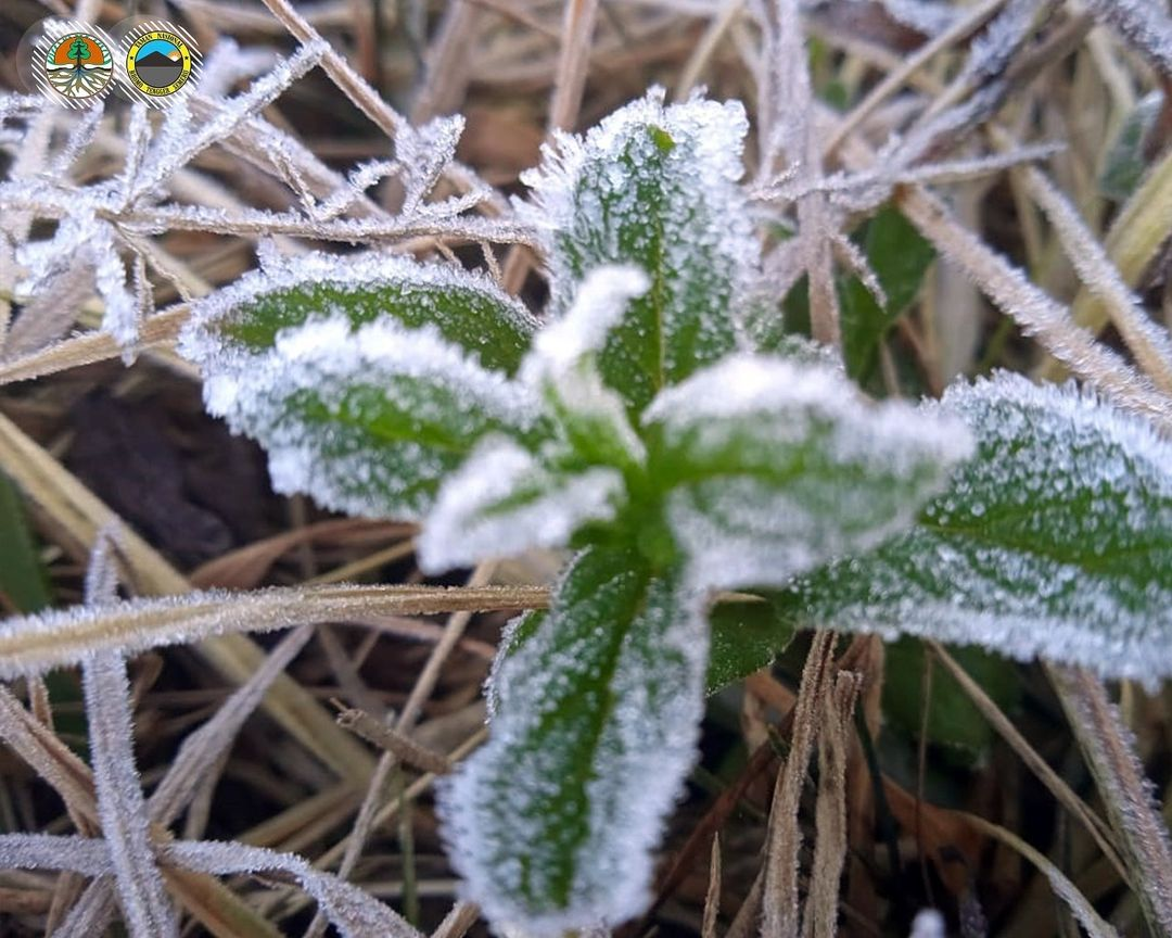 https: img.okezone.com content 2021 08 02 406 2449491 kawasan-bromo-tengger-semeru-diselimuti-salju-suhunya-dingin-banget-vcmnFBqpbn.jpg