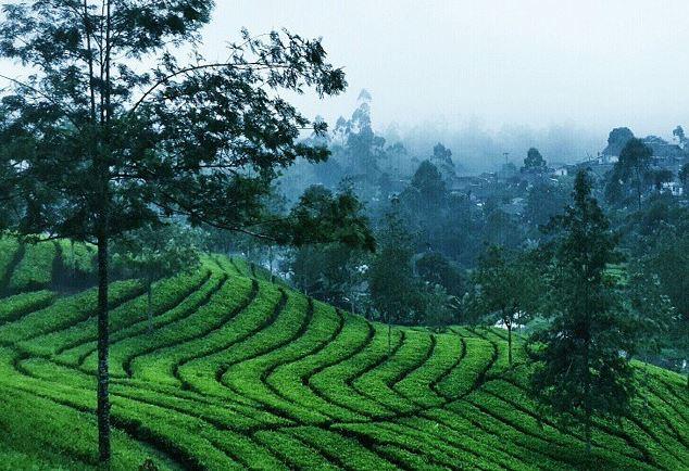 https: img.okezone.com content 2021 08 02 408 2449356 cantiknya-nuansa-riung-gunung-kebun-teh-dengan-pemandangan-ala-swiss-MW1WzFyxFL.JPG