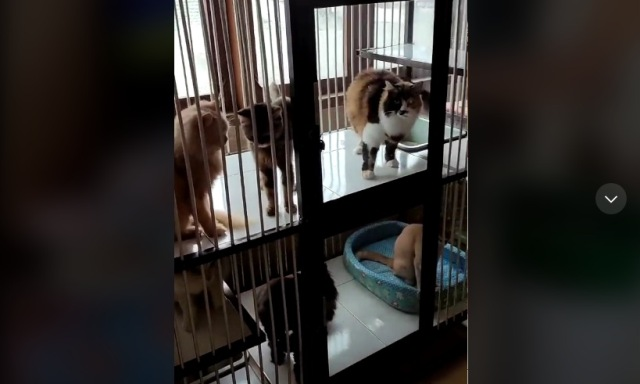 https: img.okezone.com content 2021 08 02 612 2449563 viral-kucing-kucing-berisik-tunggu-makanan-di-hajatan-ulang-tahun-TcdAAgn3jV.jpg