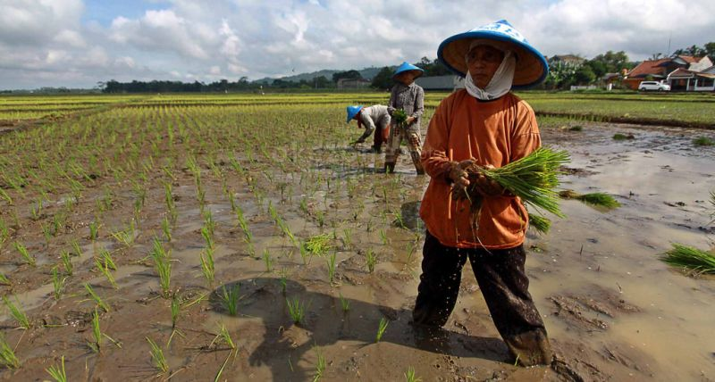 https: img.okezone.com content 2021 08 06 1 2452118 petani-di-lampung-selatan-terancam-kekeringan-kementan-ingatkan-autp-DuPPd2MCla.jpg