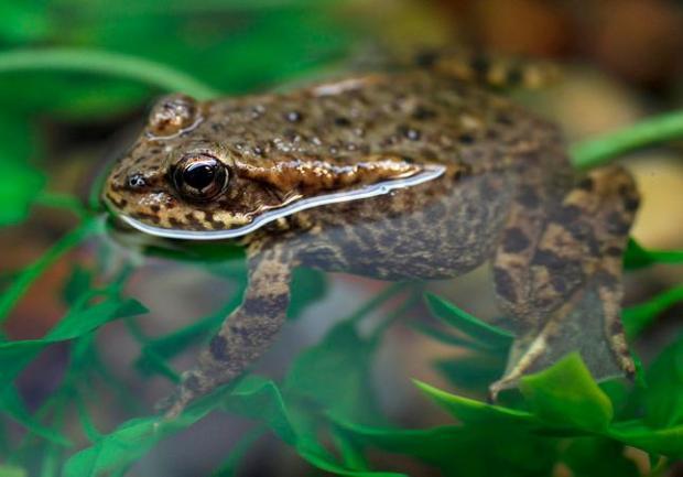 https: img.okezone.com content 2021 08 07 406 2452323 selamatkan-taman-nasional-kebun-binatang-gelar-operasi-katak-ic3WdInImR.jpg