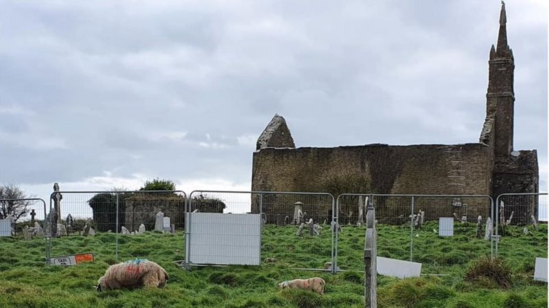 https: img.okezone.com content 2021 08 07 406 2452406 ratusan-kuburan-kuno-yang-terlupakan-ditemukan-berkat-bantuan-kambing-K5gVLRZm2M.jpg