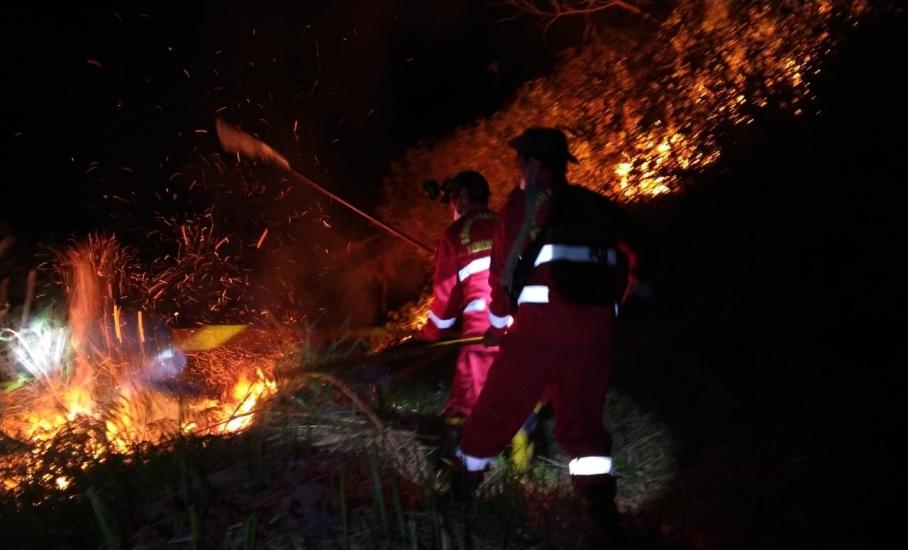https: img.okezone.com content 2021 08 07 608 2452370 hanguskan-25-hektare-terduga-pelaku-pembakar-hutan-sekitar-danau-toba-ditangkap-ZvIhzrxzs9.jpeg
