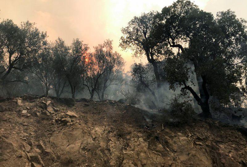 https: img.okezone.com content 2021 08 11 18 2453930 kebakaran-hutan-aljazair-tewaskan-puluhan-orang-termasuk-tentara-bKLyPyuFep.jpg