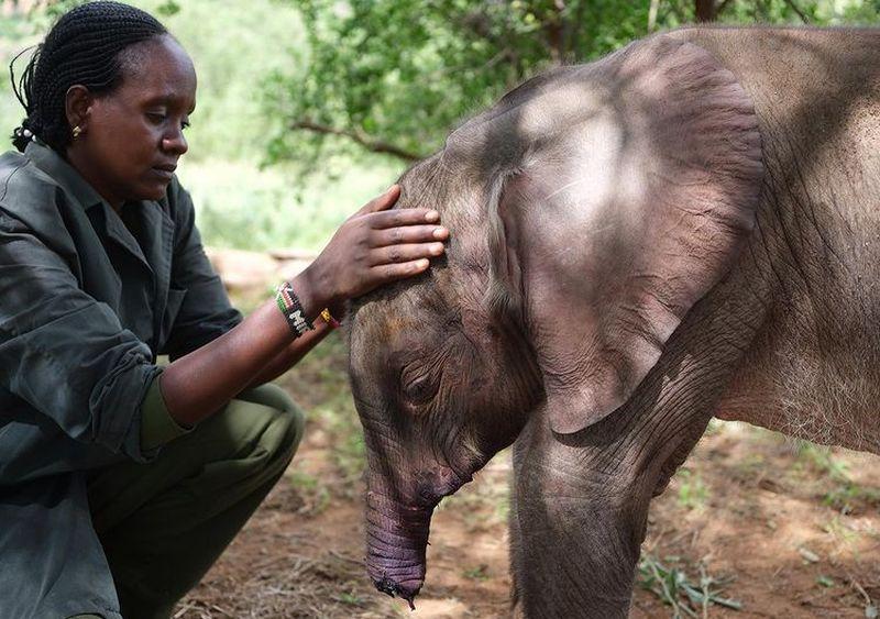 https: img.okezone.com content 2021 08 12 612 2454770 kisah-anak-gajah-yang-kehilangan-separuh-belalainya-VK3OhKasqB.jpg