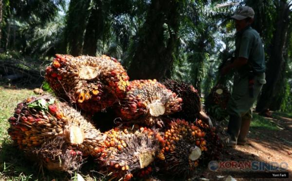 https: img.okezone.com content 2021 08 18 320 2457433 produksi-minyak-sawit-tembus-4-48-juta-ton-rbrep9h07D.jpg