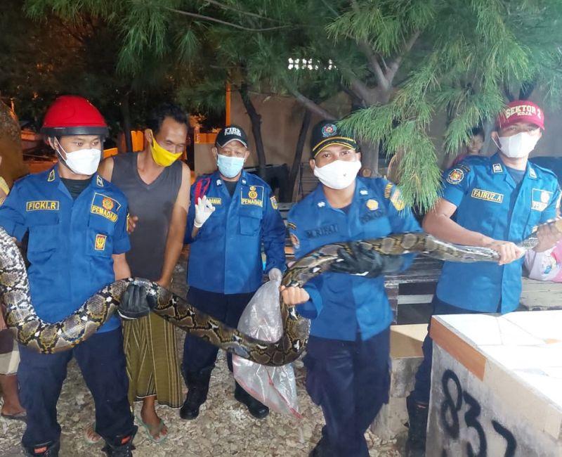 https: img.okezone.com content 2021 08 20 338 2458518 ular-sanca-sepanjang-5-meter-gegerkan-warga-pulau-tidung-c3kF9anTDv.jpg