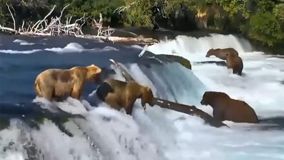 https: img.okezone.com content 2021 08 20 406 2458651 apes-banget-beruang-ini-jatuh-ke-bawah-air-terjun-saat-coba-tangkap-ikan-7uHgch4yQZ.jpg