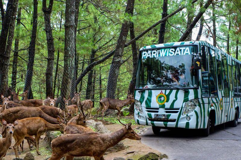 https: img.okezone.com content 2021 08 25 406 2461188 taman-safari-indonesia-kembali-dibuka-pengunjung-tak-boleh-turun-dari-mobil-EOj8SPVIXJ.jpg