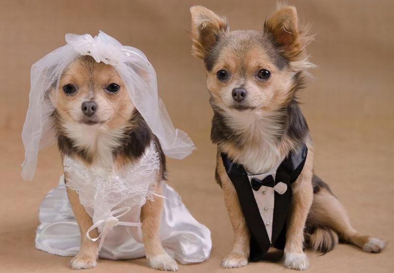 https: img.okezone.com content 2021 08 26 612 2461395 hari-anjing-sedunia-waspadai-gejala-covid-19-pada-anjing-y6GVMMdufi.jpg