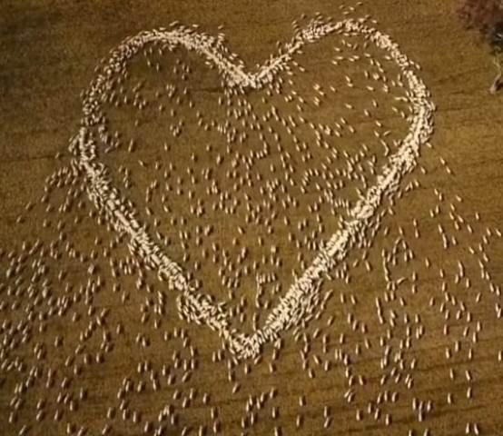 https: img.okezone.com content 2021 08 27 620 2462024 karya-seni-domba-berbentuk-hati-raksasa-persembahan-cinta-ke-tante-yang-meninggal-Eow2mIEzk7.jpg