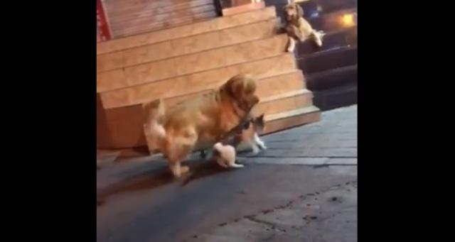 https: img.okezone.com content 2021 08 28 612 2462599 viral-anjing-pisahkan-2-kucing-berkelahi-netizen-penengah-yang-baik-cimUrfYt9Z.jpg