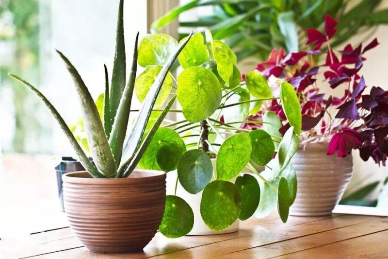 https: img.okezone.com content 2021 09 01 612 2464497 cocok-jadi-dekorasi-di-ruangan-ini-5-tanaman-hias-yang-mampu-hilangkan-stress-zOtF9I5kbe.jpg