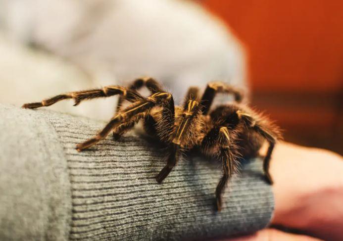 https: img.okezone.com content 2021 09 06 406 2466685 ngeri-apartemen-kosong-ini-dihuni-ular-piton-dan-belasan-tarantula-SEn1zbmxuB.JPG