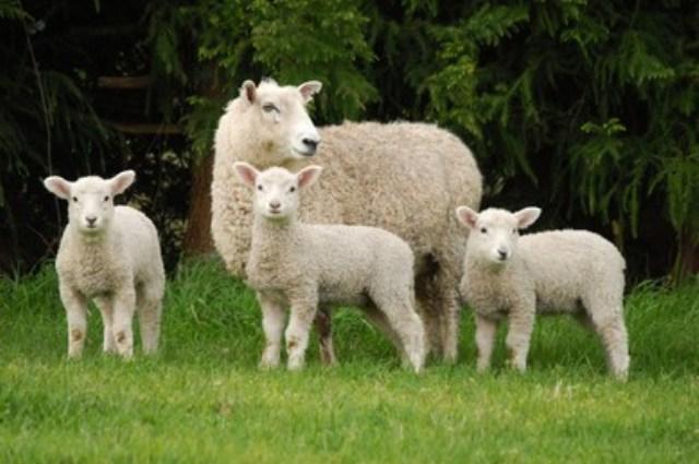 https: img.okezone.com content 2021 09 06 614 2467106 domba-miliki-banyak-keistimewaan-ini-penjelasan-alquran-dan-sains-VHJ4ZheVrf.jpg