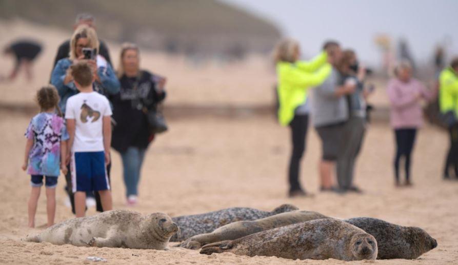 https: img.okezone.com content 2021 09 07 406 2467232 pengunjung-pantai-dikecam-gegara-jadikan-anjing-laut-hamil-objek-selfie-QVzTVnq8bV.JPG