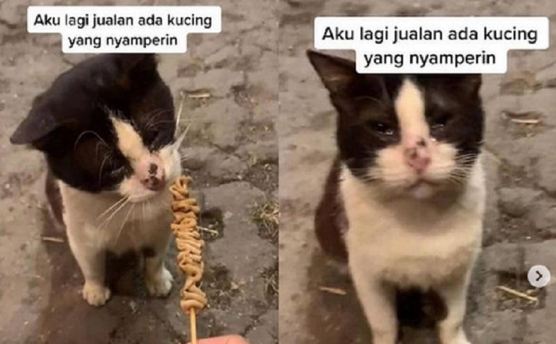 https: img.okezone.com content 2021 09 09 612 2468723 kucing-ini-kelaparan-sampai-nangis-netizen-pengen-kukasih-jajan-CWlum24vPH.jpg