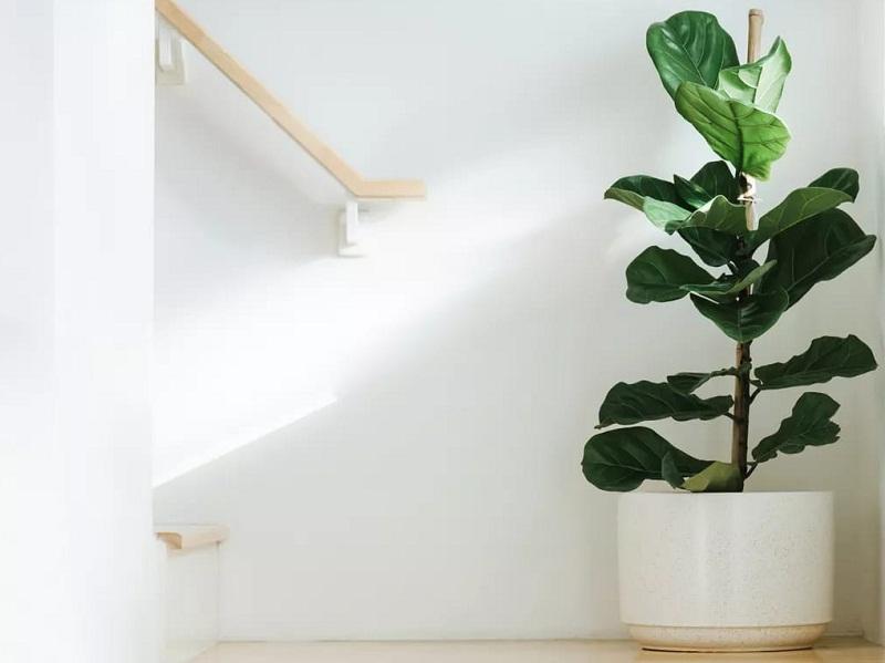 https: img.okezone.com content 2021 09 12 470 2470016 5-tanaman-yang-bikin-rumah-nyaman-dan-berwarna-k6kosU2LA2.jpg