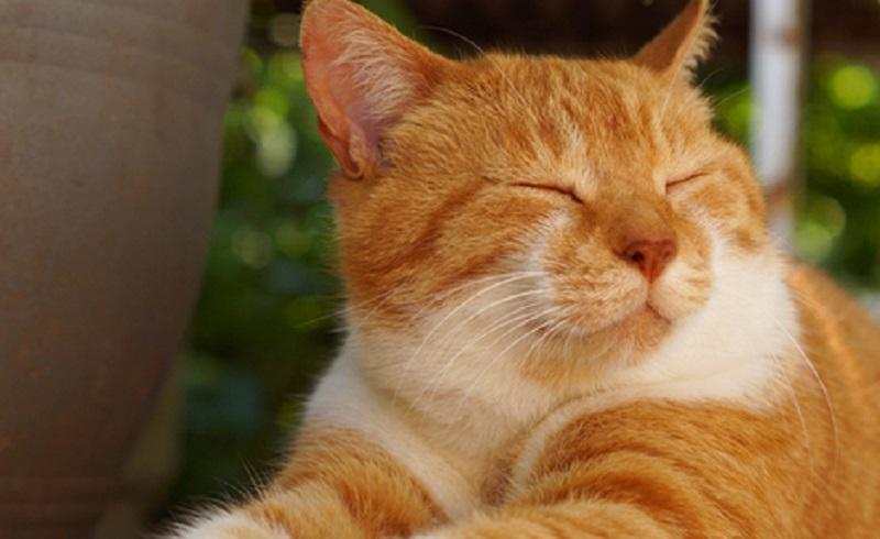 https: img.okezone.com content 2021 09 13 612 2470625 jangan-pernah-berikan-7-makanan-ini-kepada-kucingmu-berbahaya-Nwo7gfIIBG.jpg