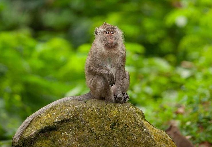 https: img.okezone.com content 2021 09 14 406 2470873 viral-gerombolan-monyet-serbu-permukiman-warga-bikin-suasana-mencekam-NfwA27nesF.JPG