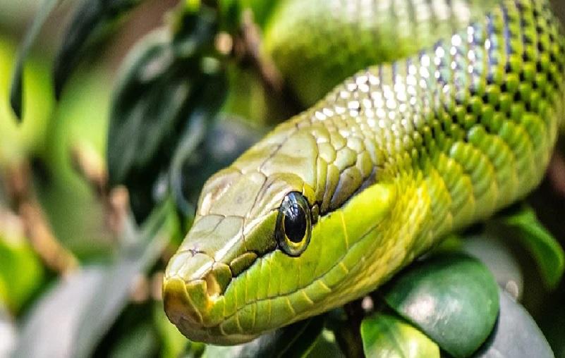 https: img.okezone.com content 2021 09 15 18 2471839 kisah-ular-yang-berhasil-bertahan-meski-bumi-dihantam-asteroid-YCVARlpX81.jpg