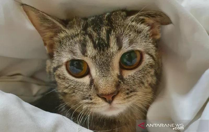https: img.okezone.com content 2021 09 15 18 2471895 dua-kucing-piaraan-positif-covid-19-tertular-dari-pemiliknya-wqFRF06b80.jpg