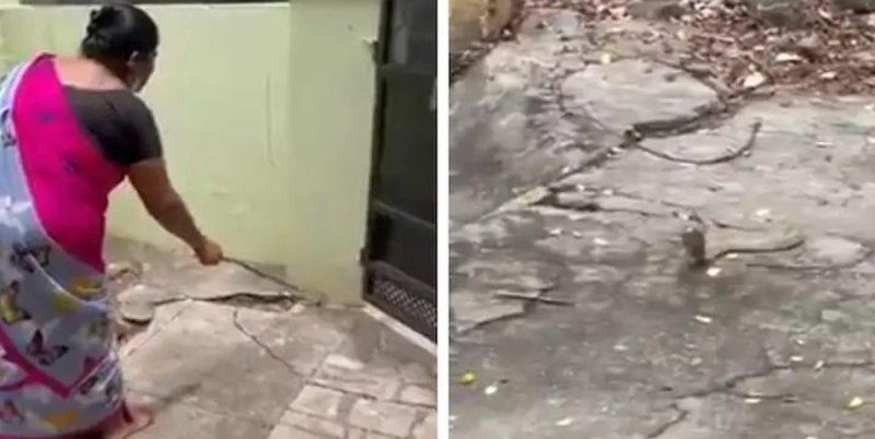 https: img.okezone.com content 2021 09 15 406 2471956 viral-emak-emak-usir-ular-kobra-secara-lembut-keibuan-banget-53DBW3AQwd.jpg