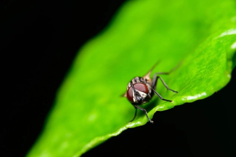 https: img.okezone.com content 2021 09 16 624 2472350 ciri-ciri-hewan-invertebrata-paling-banyak-di-bumi-aA12fOOfLD.jpg