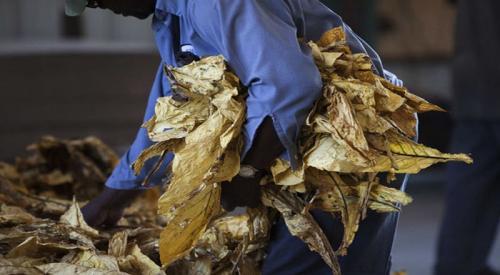 https: img.okezone.com content 2021 09 19 612 2473710 mengenal-asal-mula-tembakau-di-indonesia-populer-dijual-roro-mendut-tPpmYclFIM.jpg
