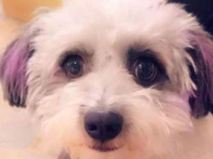https: img.okezone.com content 2021 09 20 406 2473901 3-pekan-hilang-di-bandara-anjing-snoopy-akhirnya-ditemukan-joG5kqICIy.JPG