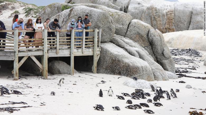 https: img.okezone.com content 2021 09 21 18 2474406 kawanan-lebah-bunuh-63-penguin-yang-terancam-punah-C6aEcsXJdC.jpg