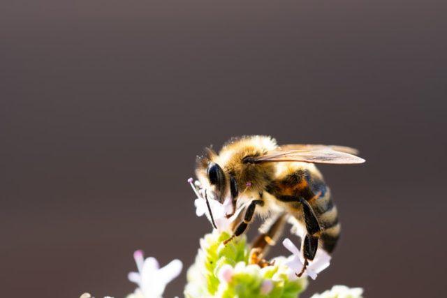 https: img.okezone.com content 2021 09 21 614 2474424 alquran-dan-sains-ungkap-keistimewaan-lebah-bisa-obat-berbagai-penyakit-IBRff0Jw7K.jpg