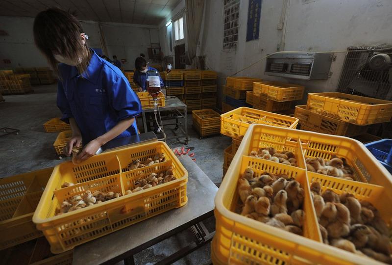 https: img.okezone.com content 2021 09 23 18 2475659 china-temukan-lagi-kasus-flu-burung-h5n6-pada-manusia-LKYDHk7P5y.jpg