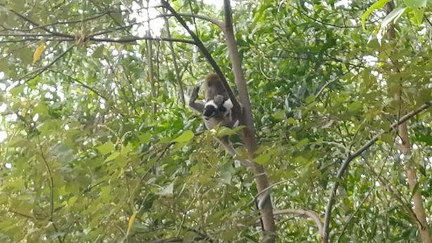 https: img.okezone.com content 2021 09 23 18 2475678 serangan-monyet-liar-sandera-anak-anjing-selama-3-hari-cRb9c9bgbL.jpg