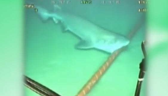 https: img.okezone.com content 2021 09 25 65 2476752 bisakah-hiu-gigit-kabel-bawah-laut-simak-penjelasan-pakar-perikanan-ipb-DhYMyMeWWf.jpg