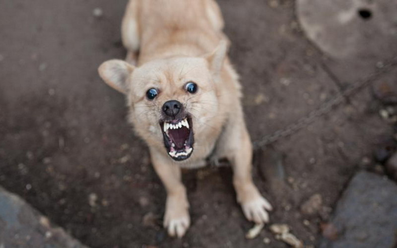 https: img.okezone.com content 2021 09 27 612 2477727 hari-rabies-sedunia-yuk-kenali-penyakit-berbahaya-yang-ditularkan-anjing-dan-kucing-6OdLHujQU4.jpg
