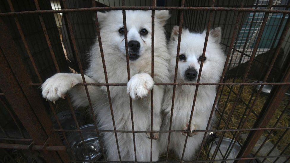 https: img.okezone.com content 2021 09 28 18 2477836 presiden-korsel-pertimbangkan-larangan-konsumsi-daging-anjing-CAwGP1lbo9.jpg