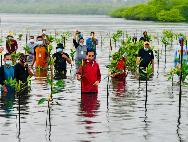 https: img.okezone.com content 2021 09 28 337 2478276 tanam-mangrove-di-batam-presiden-jokowi-ikut-nyemplung-2lVWtY4qro.jpg