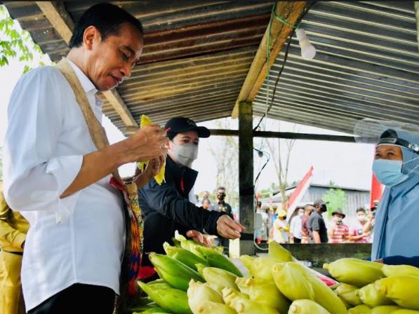 https: img.okezone.com content 2021 10 04 337 2480948 asyiknya-jokowi-makan-jagung-rebus-di-pinggir-jalan-kabupaten-sorong-6NrEB3vjQt.jpg