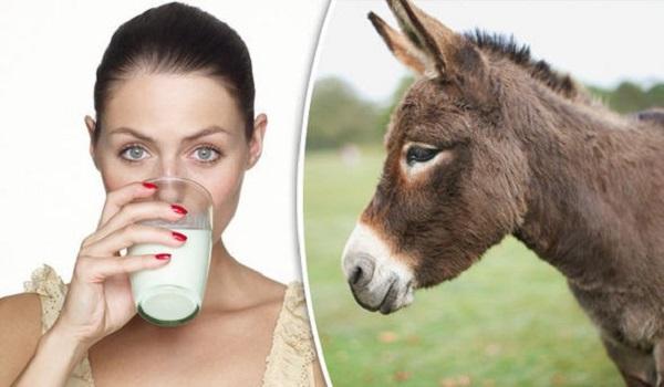 https: img.okezone.com content 2021 10 04 611 2480999 3-manfaat-susu-keledai-untuk-kulit-cantikmu-j99ECI1i6Z.jpeg