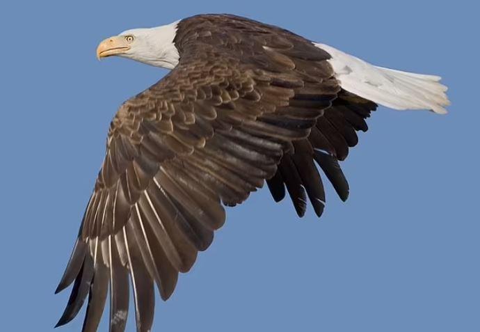 https: img.okezone.com content 2021 10 06 406 2482360 burung-banyak-migrasi-ke-perkotaan-selama-pandemi-peneliti-ungkap-faktanya-qa93FMqX8W.JPG