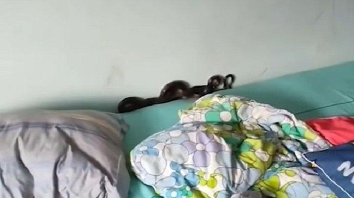 https: img.okezone.com content 2021 10 10 18 2484039 bayi-ini-tidak-tidur-semalaman-ibunya-temukan-ular-hitam-di-bawah-bantal-1AYFPYy74A.jpg