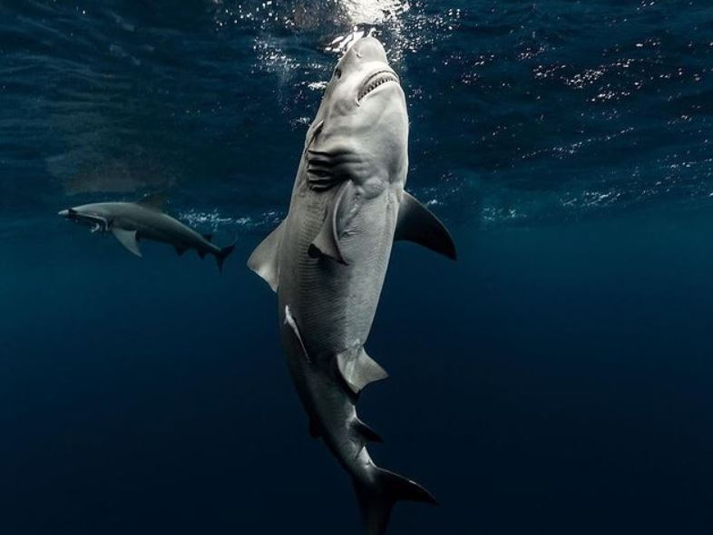 https: img.okezone.com content 2021 10 10 406 2483982 iseng-cari-lumba-lumba-wanita-ini-malah-ketemu-hiu-2M3mvlFDZX.JPG